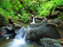 tropical-forest-journey-image2
